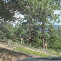 Hunting Land for Sale in Park County, CO