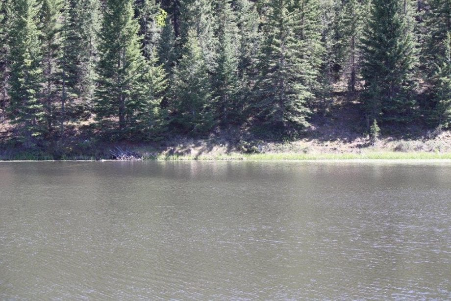 Colorado Land with Live Water For Sale