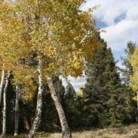 Elk Valley Neighborhood Home for Sale in Teller County, CO