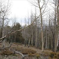 Pikes Peak Beauty  for Sale in Teller County, CO