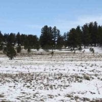 Lake George Horse Haven Land for Sale in Park County, CO