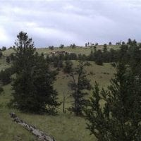 Wilderness Retreat for Sale in Park County, CO